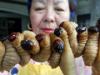 20130516-bugsfood