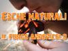 Esche Naturali per Fuoco fungo arboricolo